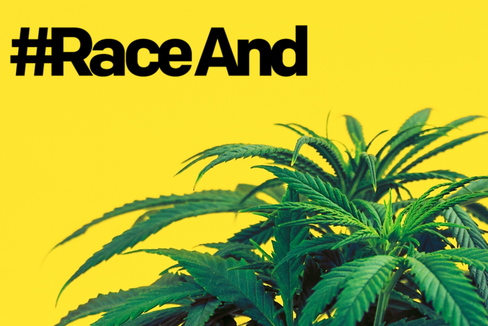 yellow background with green cannabis plant in foreground